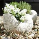 Pflanzmuschel Keramik weis gewischt 21x14x15 cm