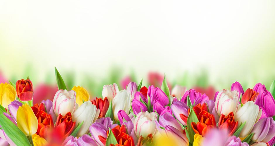 Frühlingserwachen !